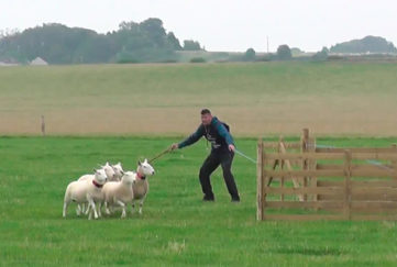 World Sheepdog Trials