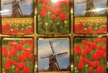 Dutch tulips and windmills, typical sights in the Netherlands