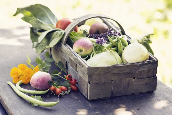 basket with vegetables such as kohlrabi,onion,beans, fruit like apples and pears, on wooden board oudoors in garden, decorated with blooming basil and rose hips
