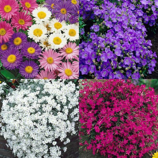 30 Ground Cover Collection