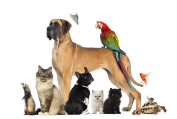 Pets page