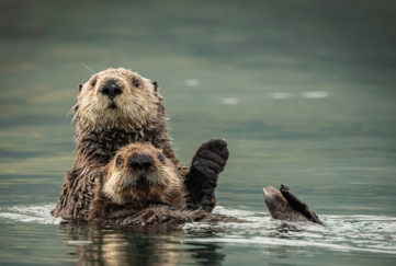 obession with otters